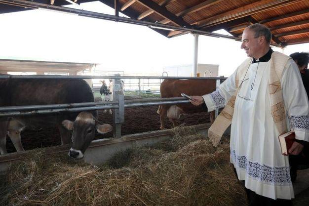 La benedizione degli animali di Fico (foto Schicchi)