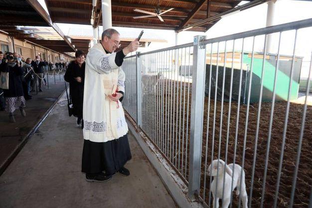 La benedizione in occasione di Sant'Antonio Abate (foto Schicchi)