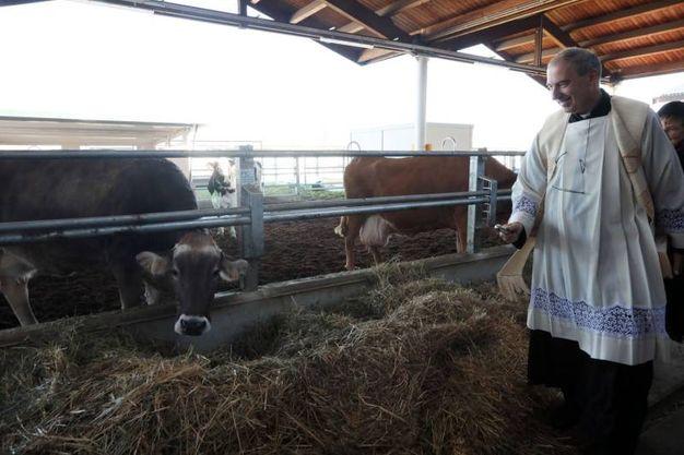 A Fico è appena nato un nuovo agnellino (foto Schicchi)