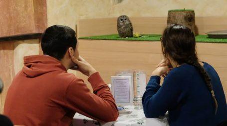 Due clienti con il gufo sullo sfondo (Fotolive)