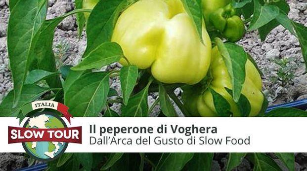 I peperoni di Voghera
