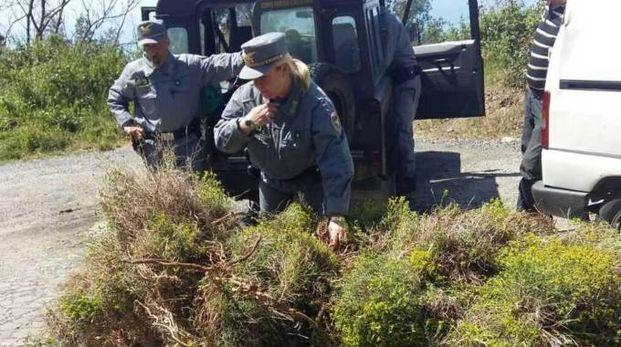 I carabinieri forestali