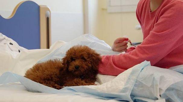 Un cane con il suo padrone in ospedale