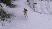 Neve sui colli bolognesi, foto inviata da Marcello