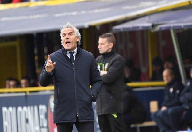 Bologna-Fiorentina, le foto della partita. Il tecnico rossoblù, Donadoni (FotoSchicchi)
