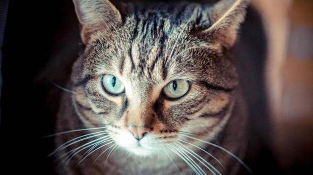 Il gatto è stato trovato moribondo (foto d'archivio)