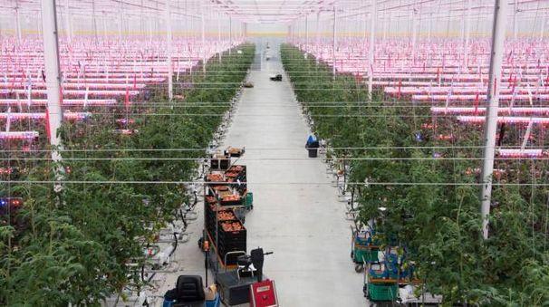 La serra Fri El Greenhouse