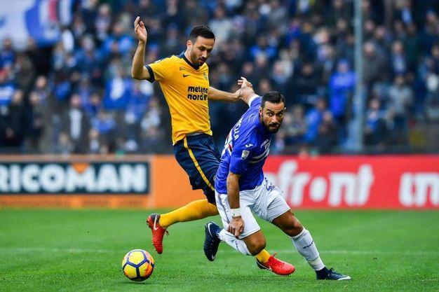 Sampdoria-Verona 2-0, Quagliarella (Ansa)