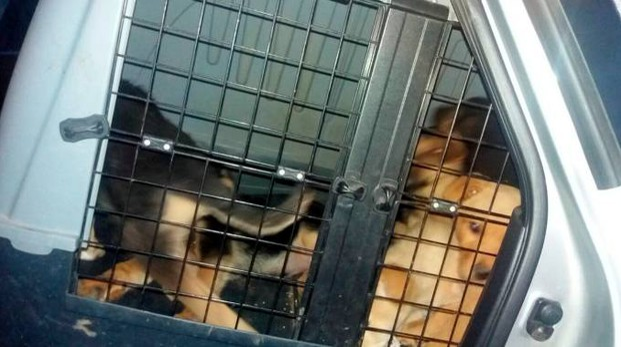 Alcuni dei cani sequestrati