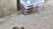 Il pacco sospetto trovato vicino alla scuola elemntare Rossini (New Press Photo)