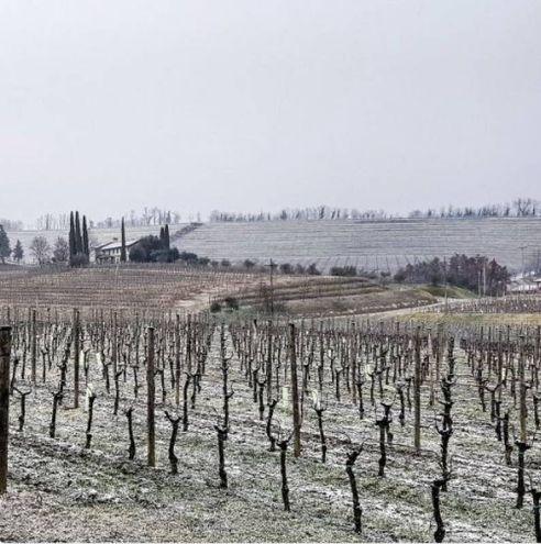 Neve sul Collio, Friuli-Venezia Giulia (Foto Twitter /@EttoreRomoli)