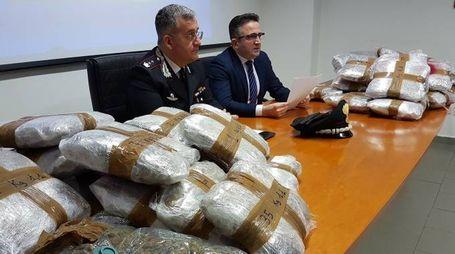 La marijuana sequestrata dai carabinieri a Rimini (foto Migliorini)