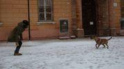 Con i cani sotto la neve (foto Ravaglia)