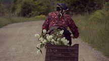 L'anziana è stata investita in bici