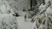 La neve sui colli a Bologna