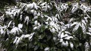 Bologna, piante sotto la neve