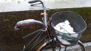 Neve in bicicletta a Bologna