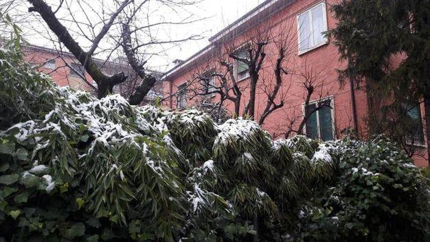 Bologna, il giardino (Foto di Chiara)