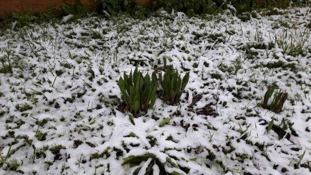La neve a Bologna