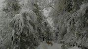 Tra i boschi innevati in collina a Bologna