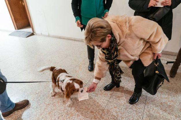 Anche il cane dice la sua (foto Zeppilli)