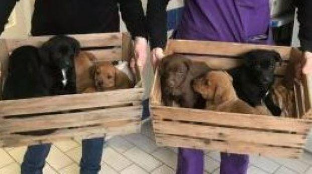 I cuccioli abbandonati