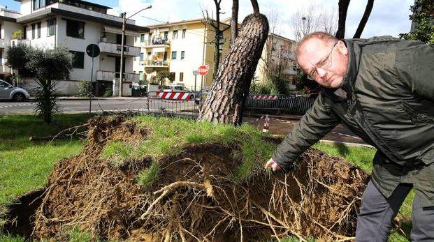 L'albero caduto nel parco di via Nofretti