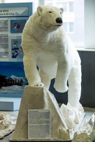 """Bicocca, la mostra""""Artico – Viaggio interattivo al Polo Nord"""""""