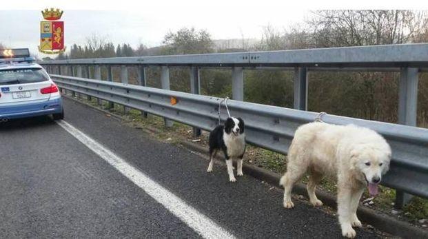 I cani sulla Firenze-Pisa-Livorno