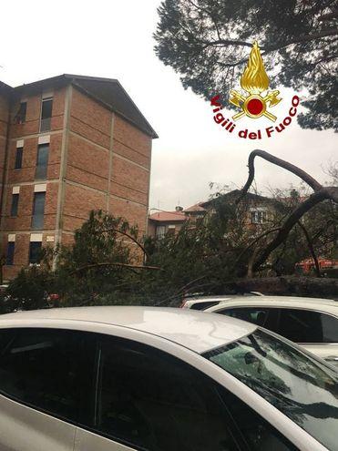 Cade un albero e danneggia quattro auto