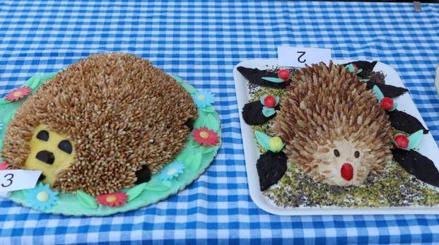 Festa del Porcospino a Mercato Saraceno (foto Ravaglia)
