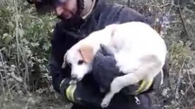 Nana, la cagnolina salvata dai vigili del fuoco