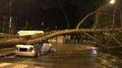Il pino caduto e l'auto distrutta