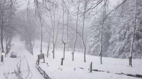 Neve sul monte Fumaiolo