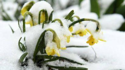 Neve in primavera, rischio gelo nelle campagne (Ansa)