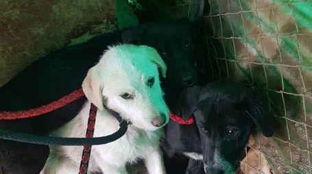 Cuccioli recuperati a Fiesole