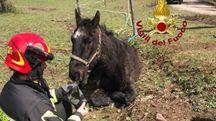 Il cavallo messo in salvo dai vigili del fuoco