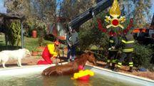 Il cavallo in piscina
