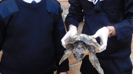 La tartaruga Squizzo appena recuperata