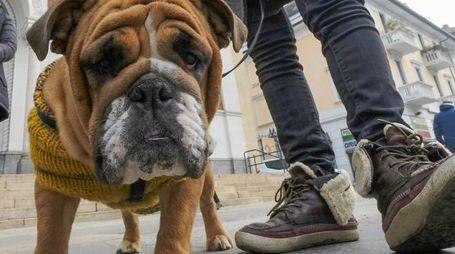 Paura per avvelenamento cani
