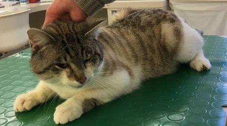 Il gatto trovato dai residenti lungo la strada e salvato dai volontari