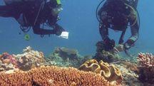 Una barriera corallina