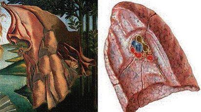 Il mantello dipinto da Botticelli nella 'Venere' riproduce l'anatomia di un polmone (Ansa)