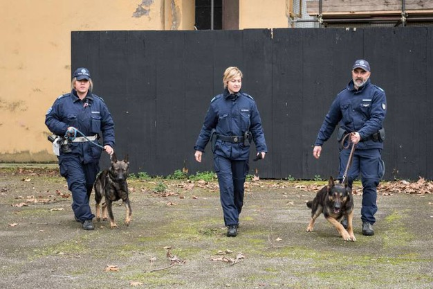 Vasco, Anubi, Axel, Apache e Grey. I magnifici cinque cani del nucleo dei cinofili della Polizia Municipale di Bologna