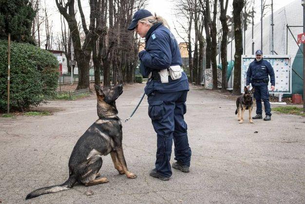 Solo nel 2017 il fiuto dei cinque quadrupedi ha permesso alla Polizia Municipale di trovare più di otto chili di droga