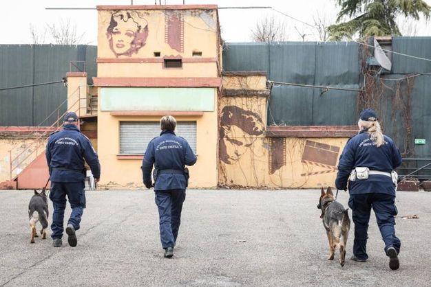 A tenere il guinzaglio dei cinque cani ci sono sei vigili, quattro uomini e due donne