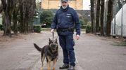 Il vigile cinofilo ha l'onere e l'onore di accudire, addestrare, nutrire e curare il suo cane giorno e notte