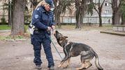 La Polizia Municipale ha attrezzato un campo dietro al Poligono di tiro di via Agucchi per tenere in allenamento gli animali