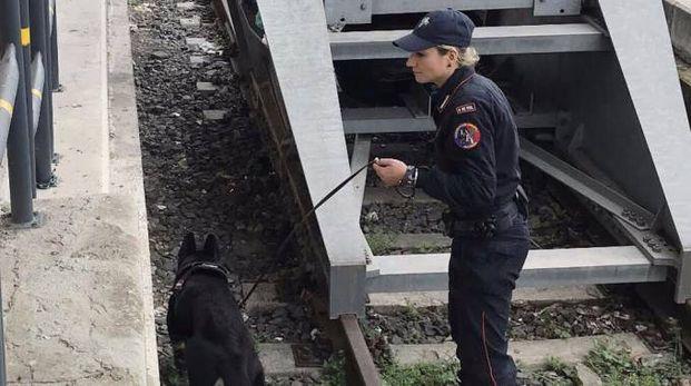 I carabinieri cinofili alla stazione