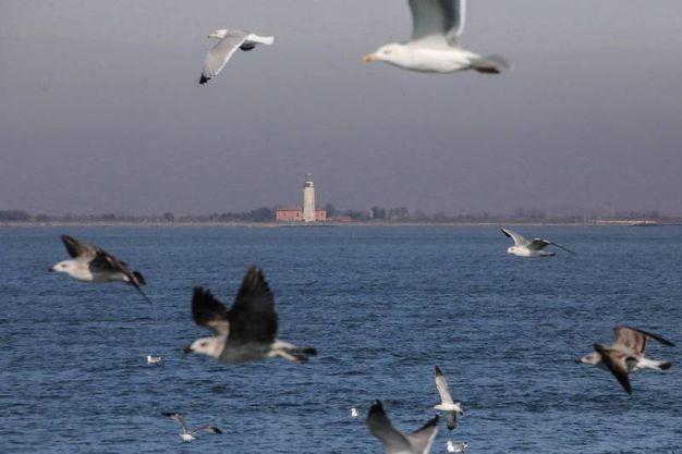 Fiera internazionale del birdwatching a Comacchio